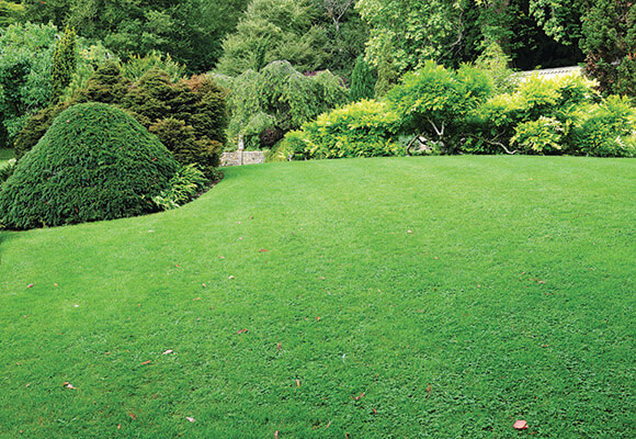 BAL Lawn grass trees bushes 580x400.jpg