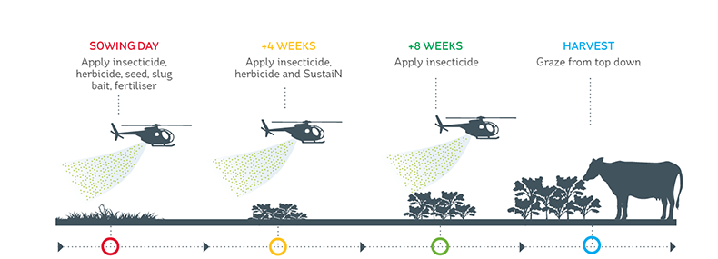 Sowing and post-emergence activities for a hill country crop sown by helicopter