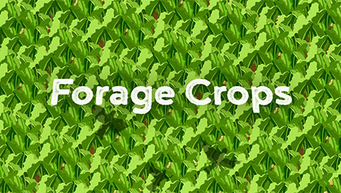 Forage crops video