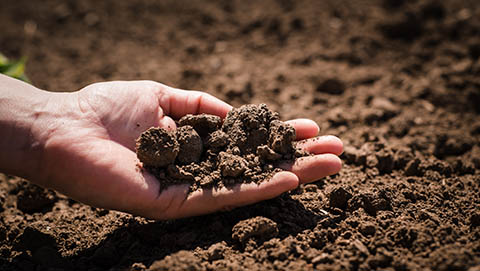 Soil in farmers hand